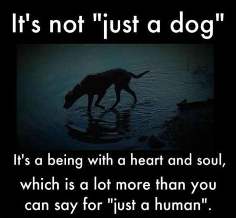 Its Just A Crush by It S Not Just A Or Any Sentient Being Stop Animal