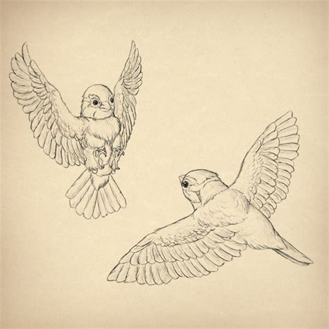 how to draw animals birds their anatomy and how to draw them