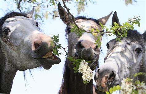 fiori di maggio testo cavallo magazine la programmazione di marted 236 24 maggio