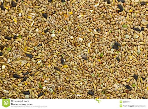 bird seed feed fill frame royalty free stock photos