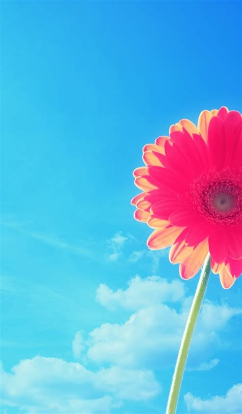 flower wallpaper tab 600x1024 red flower under the blue sky galaxy tab 2 wallpaper