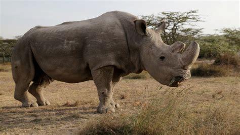 5 Animales Que Deberias Ver by Estos Los 7 Animales Que No Volveremos A Ver Y La