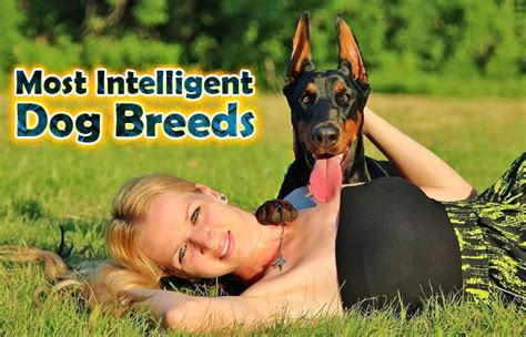 intelligent breeds most intelligent breeds did you pets