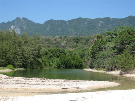 Free Extensive Search File Vero River Estuary Extensive Tropical Forest Wilderness Tutuala With