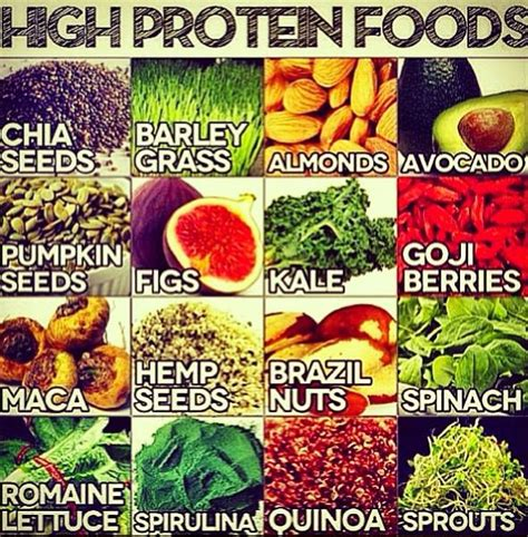 protein high foods protein foods