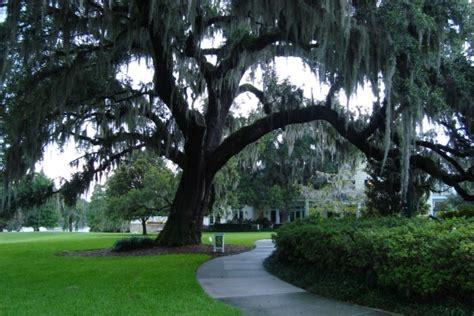 orlando tree  features  fantastic florida trees