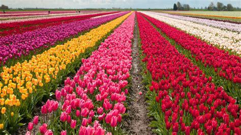 Melati Tuscany By Erkha Florist flower festivals in australia flowers for everyone