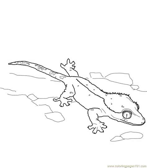 gecko lizard coloring pages coloring pages lizards coloring home