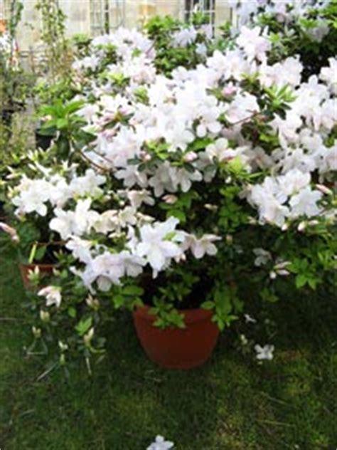 fleurir rapidement jardin au printemps