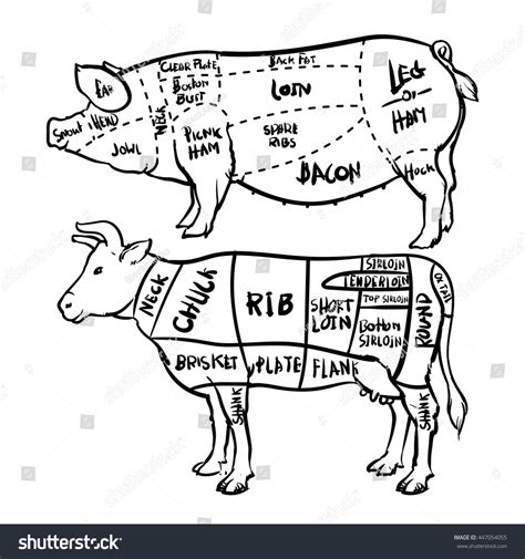 beef sections pork beef cuts diagram butchery set stock vektorgrafik