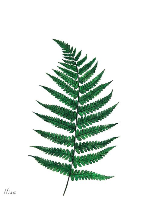 fern leaf tattoo designs fern leaf illustration pinteres