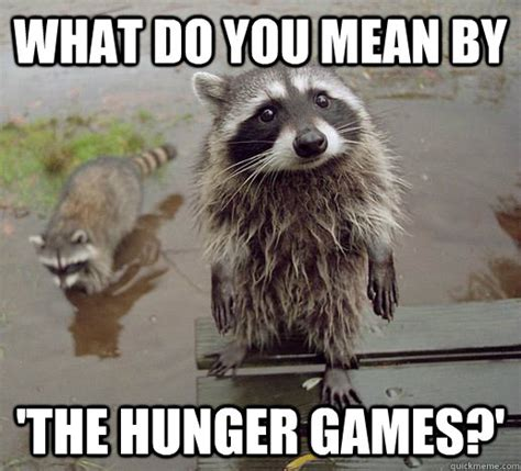 Raccoon Memes - what do you mean by the hunger games curious raccoon