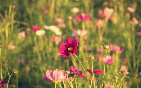 sensazione di tremore interno rimedi floreali ansia e stress naturopataonline