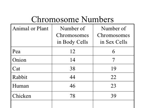 Number Of Chromosomes Worksheet Answers by Pictures Number Of Chromosomes Worksheet Getadating