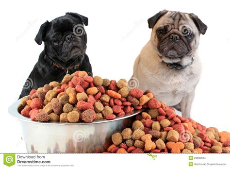 food for pugs pugs and food stock photo image of overflowing background 23690594