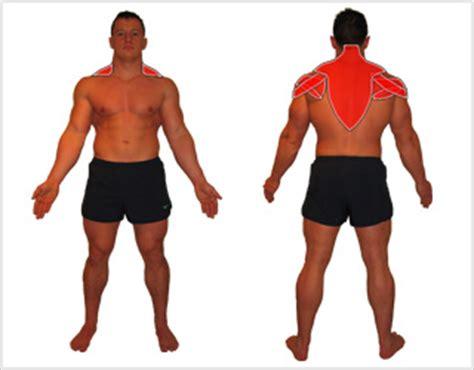 posterior shoulder pain bench press dumbell rear fly 187 rear deltoids 187 exercise encyclopedia