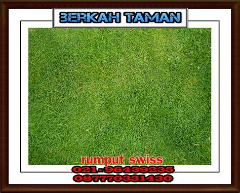 Rumput Swiss By Tukang Rumput rumput swiss tukang rumput swiss tukang taman jakarta