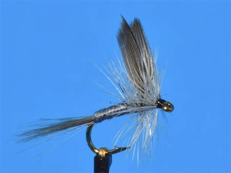 Fly L by Blue Dun Fly Sold Per 6 Ebay