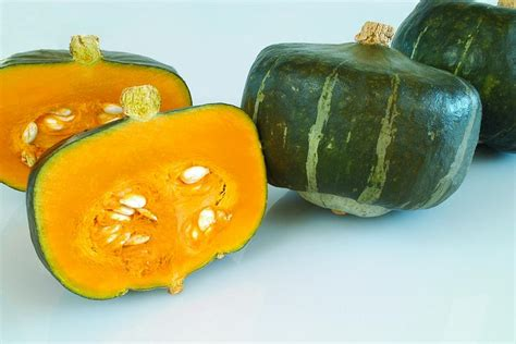 types of squash hgtv
