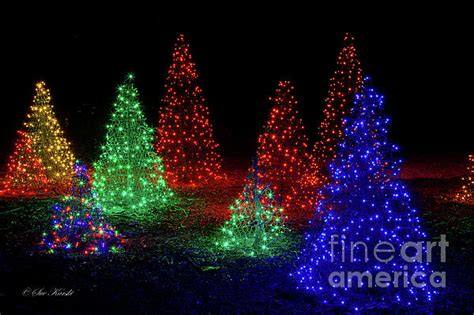 colorful christmas trees by sue karski