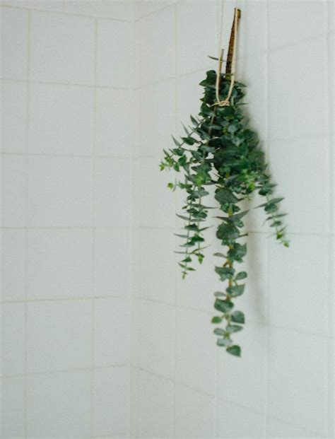 eucalyptus shower related keywords suggestions