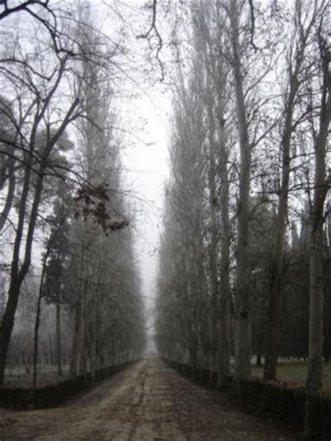 imagenes de paisajes tristes descripciones tristes 225 rboles tristes