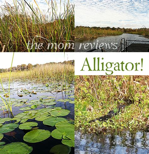 fan boat rides kissimmee fl kissimmee fl boggy creek airboats visit kissimmee