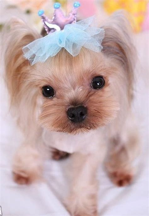 puppy bows grooming bows crown hair accessories tulle pet hair tie bow