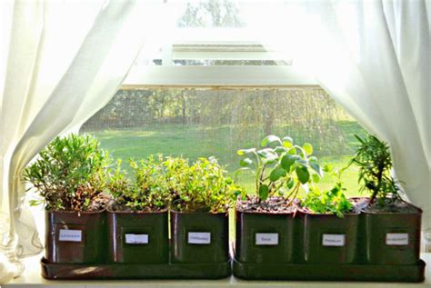 growing herbs indoors growing herbs indoors successfully countryside network