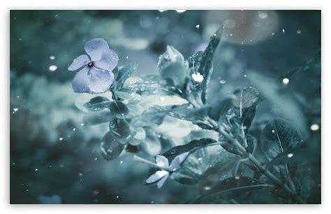 frozen wallpaper ultra hd frozen flower 4k hd desktop wallpaper for 4k ultra hd tv