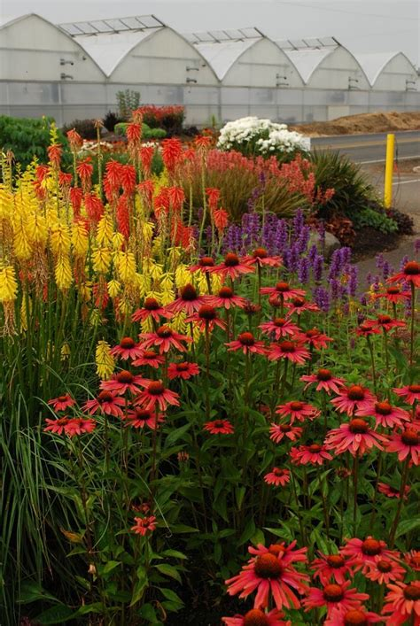 garden flowers and plants great plant combination of red hot poker echinacea salvia and others gardens pinterest