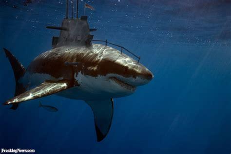the shark names the submarine whale watching boat submarine shark