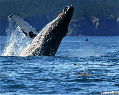 whale watching on the coast of oregon places to go