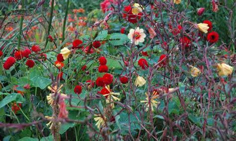 fiori per terrazzo al sole 22 piante per riparare un terrazzo in pieno sole casafacile