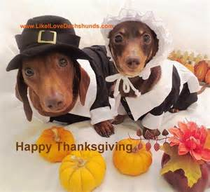dogs thanksgiving happy thanksgiving give thanks to the lord pinterest