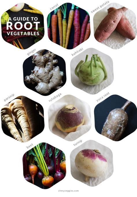 list of edible root a guide to root vegetables for vegetarian cooks from oh my veggies
