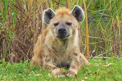 Attractive Busch Gardens Animals #2: Busch-Gardens-tampa.jpg