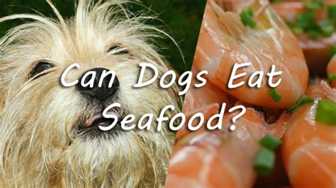 can dogs eat lobster can dogs eat seafood pet consider