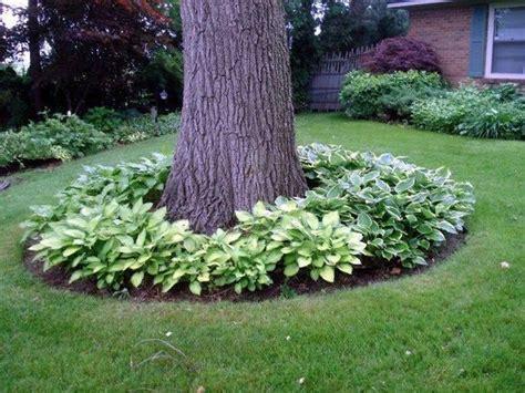 flower bed around tree best 25 landscaping around house ideas on pinterest