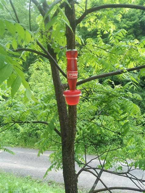 our homemade hummingbird feeder this that pinterest