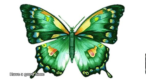 Animated Butterfly Pictures Youtube Animated Images Of Butterfly