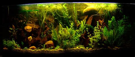 wann beißen welche fische erbitte hilfe mit gegen gr 252 nalgen aquaristik forum