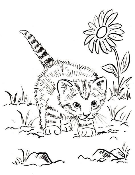 kitten coloring page dibujando  lindo gatito