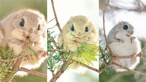 what is the cutest in the world cutest animals in the world www imgkid the image kid has it
