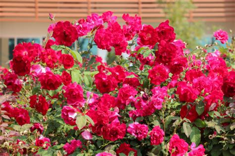 southern flowering shrubs ideal flowering plants for southern arizona s climate
