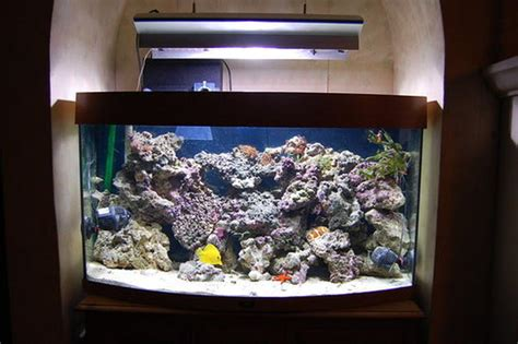 online aquarium design tool how to cure your live rock before placing it in your