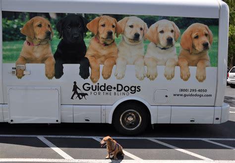 guide dogs for the blind guide dogs for the blind is my co worker