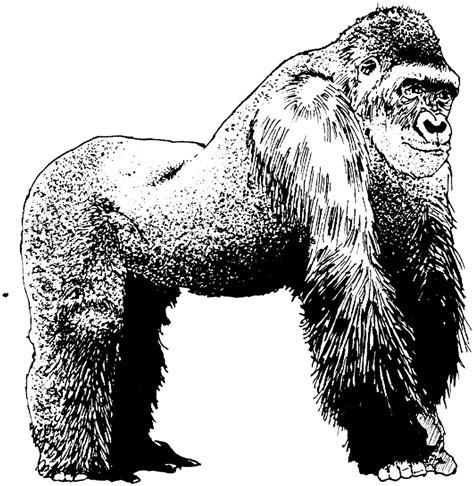 imagenes animadas blanco y negro dibujo de un gorila en blanco y negro im 225 genes y fotos