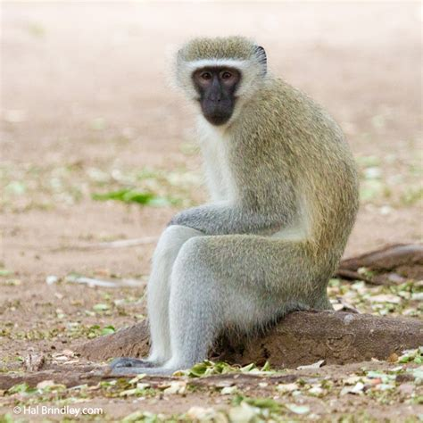 8 Days in Kruger, 34 Mammals! - Travel For Widlife
