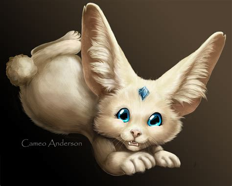 cabbit images real cabbits www imgkid the image kid has it